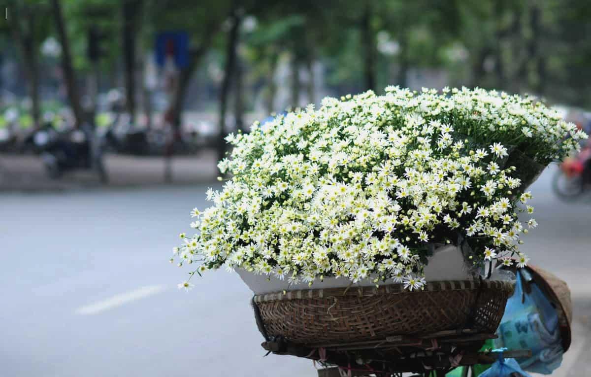 Daisy in Hanoi