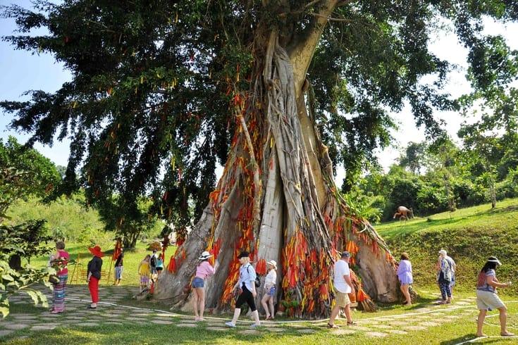 Yang Bay sacred tree