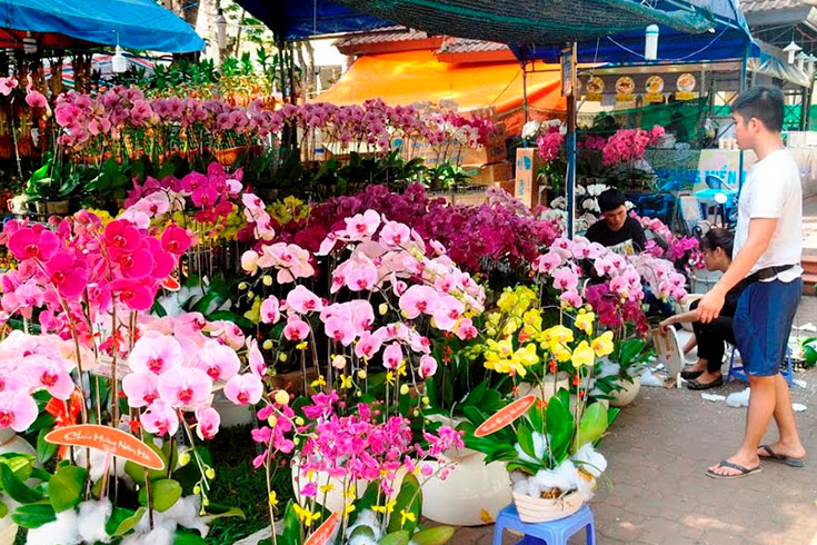 Colorful flowers in the market