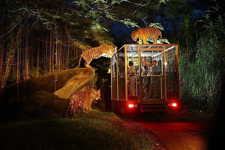 Enjoy night safari in Cat Tien National Park