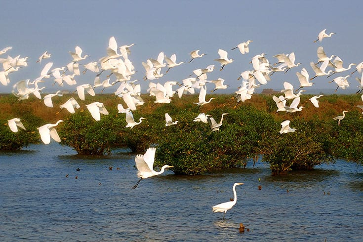 Birds in Xuan Thuy national Park