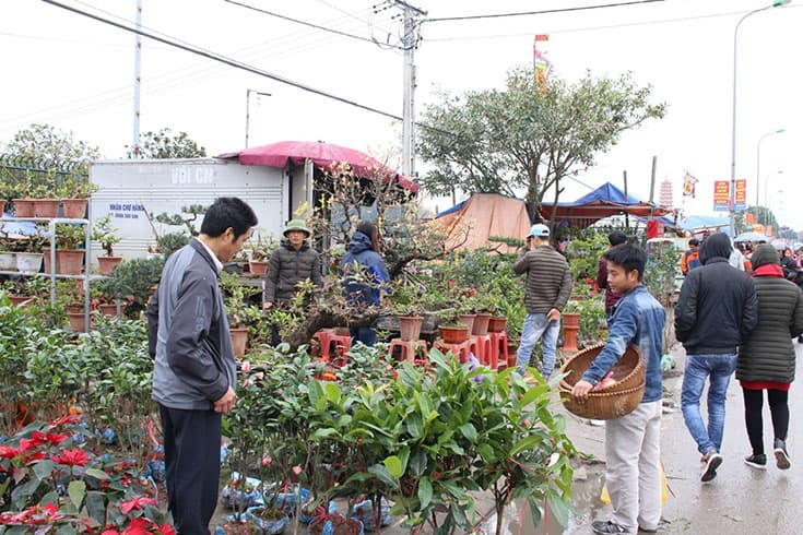 People sell trees in Vieng market festival