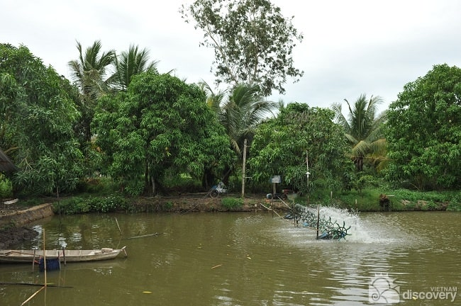 Half-day Tour to Experience Wet Rice Cultivation