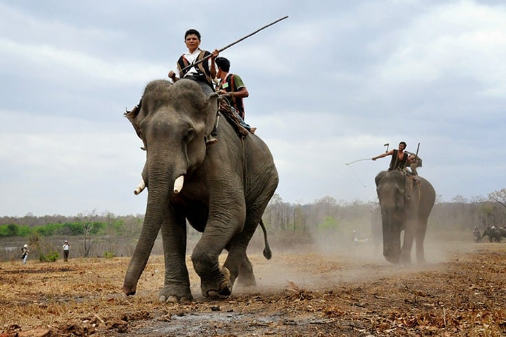 Highglights and activities in elephant race festival