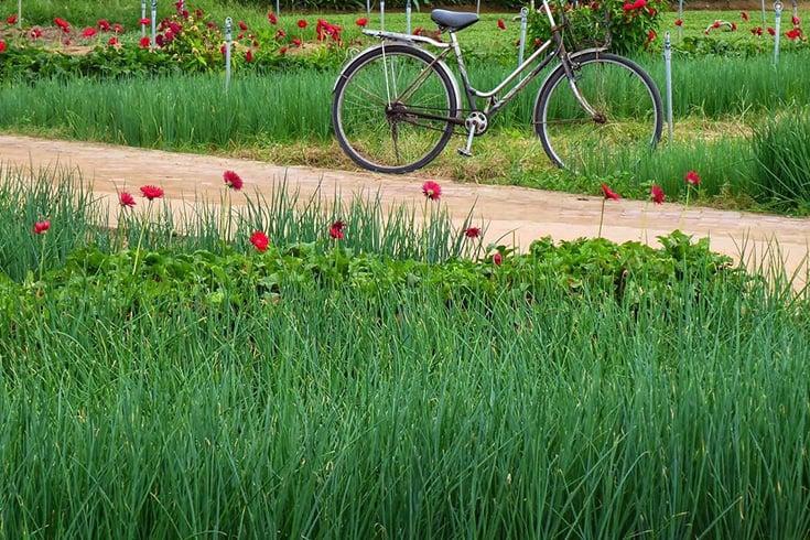 Design of Tra Que garden