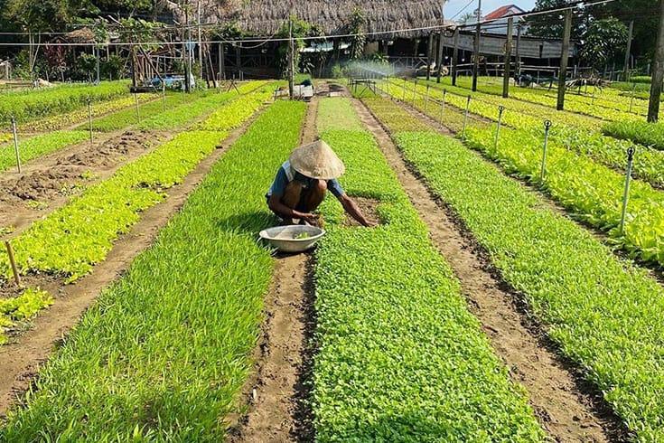 Locally Produced Ingredients in Tra Que Garden restaurant