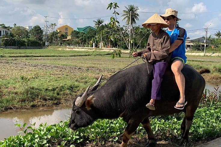 Tourist ride a water buffalo in Vietnam
