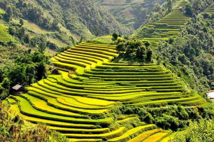 Spectacular terraced rice fields