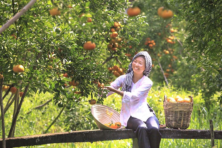 Local people in fruit orchards in Mekong delta