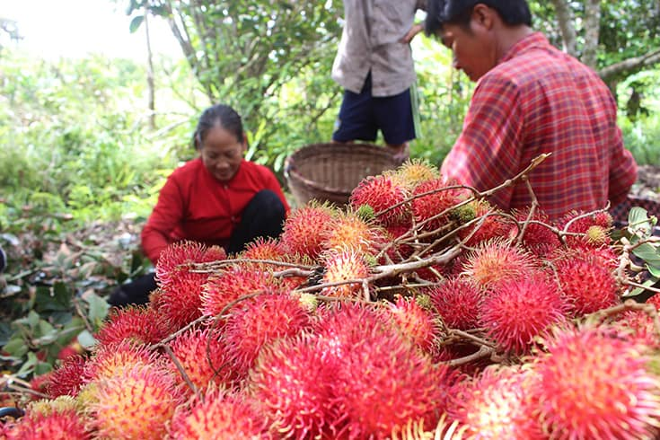Produce in fruit orchards in Mekong delta