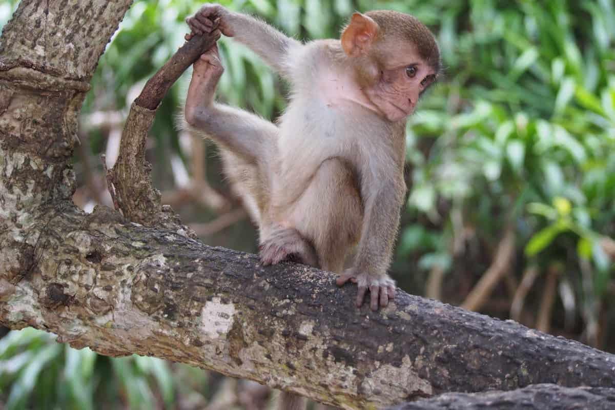 monkey-island-history
