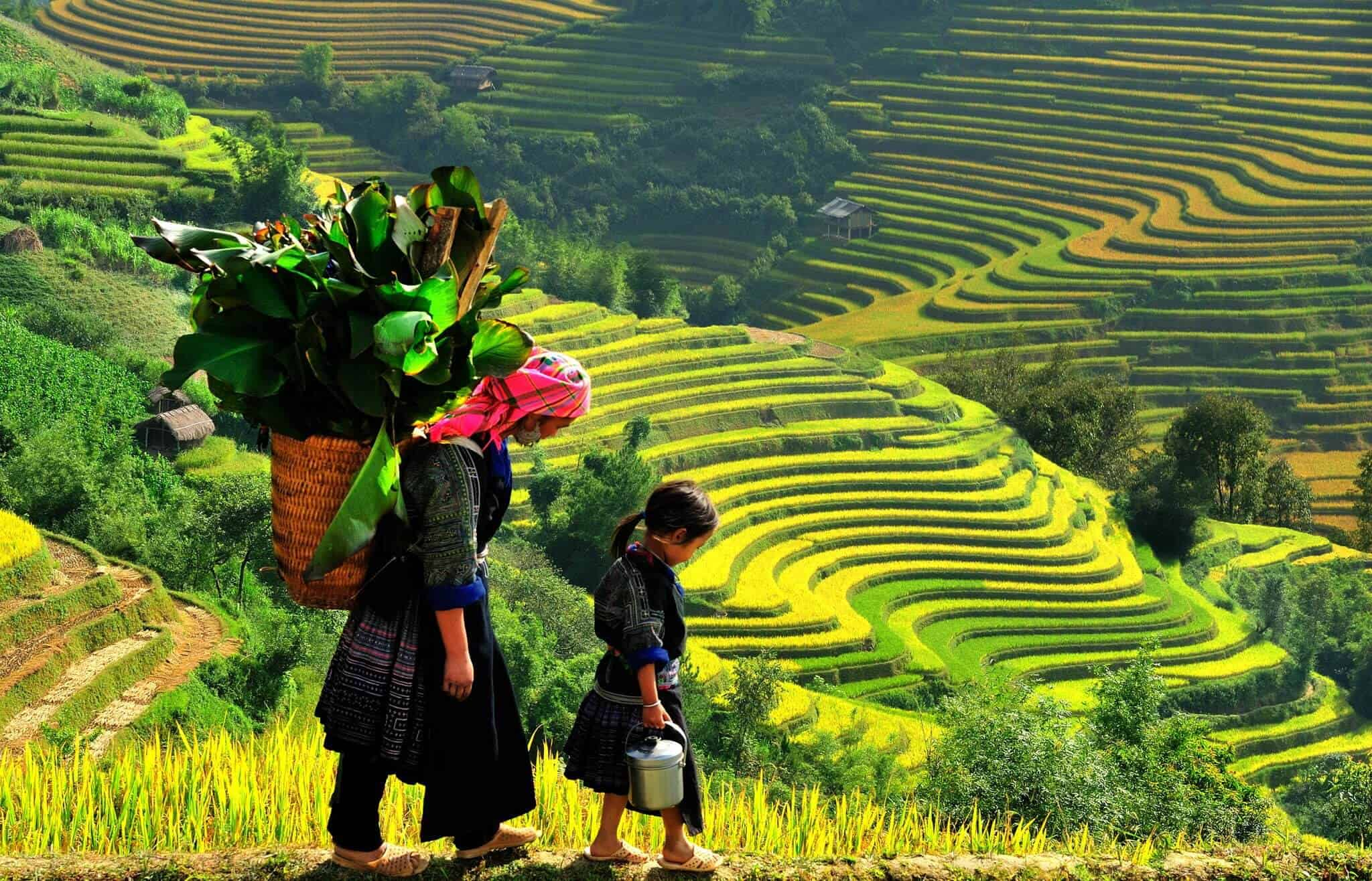 terraced-fields