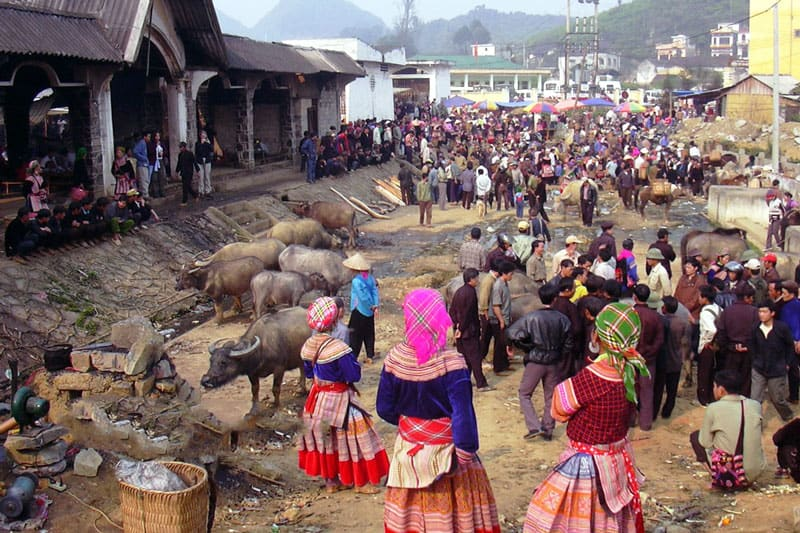 Bac Ha Sunday Market Cattle