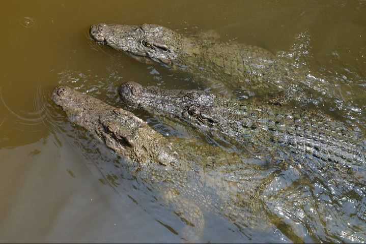 Crocodile farm in Monkey island