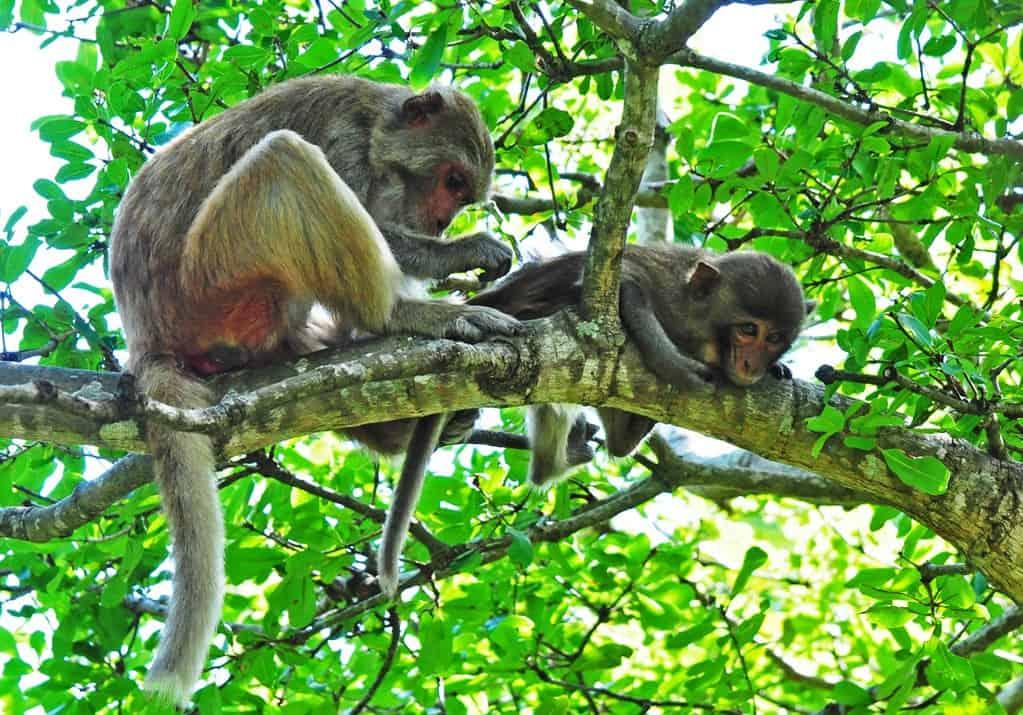Phu Quoc National Park Fauna