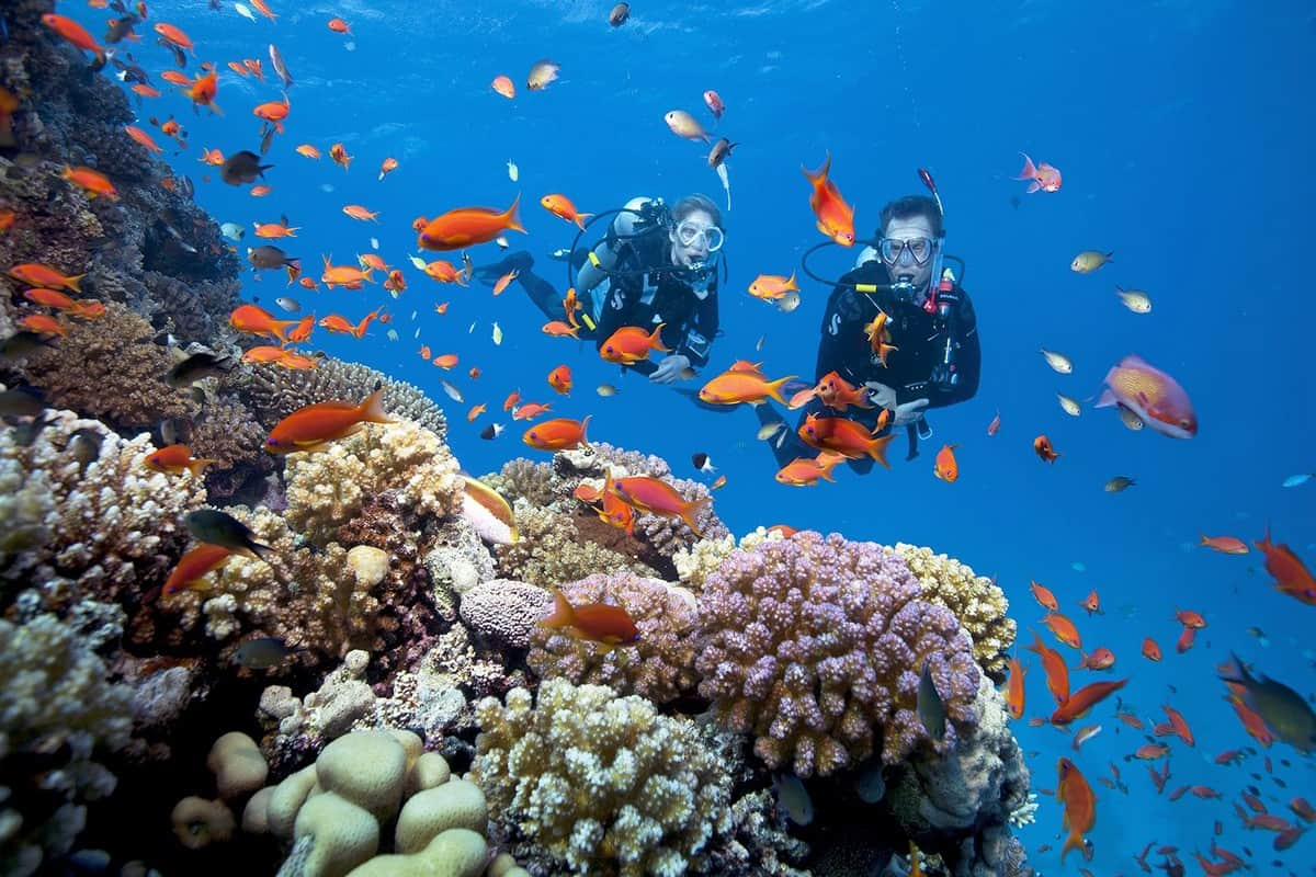 Phu Quoc National Park Snorkeling