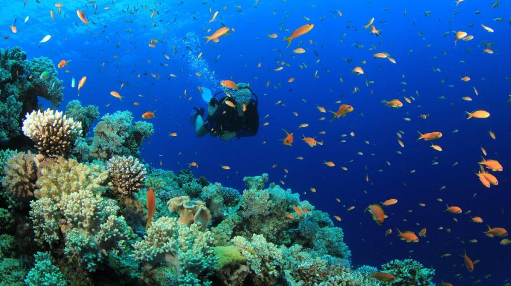 Scuba diving in Halong bay - Halong Bay in December