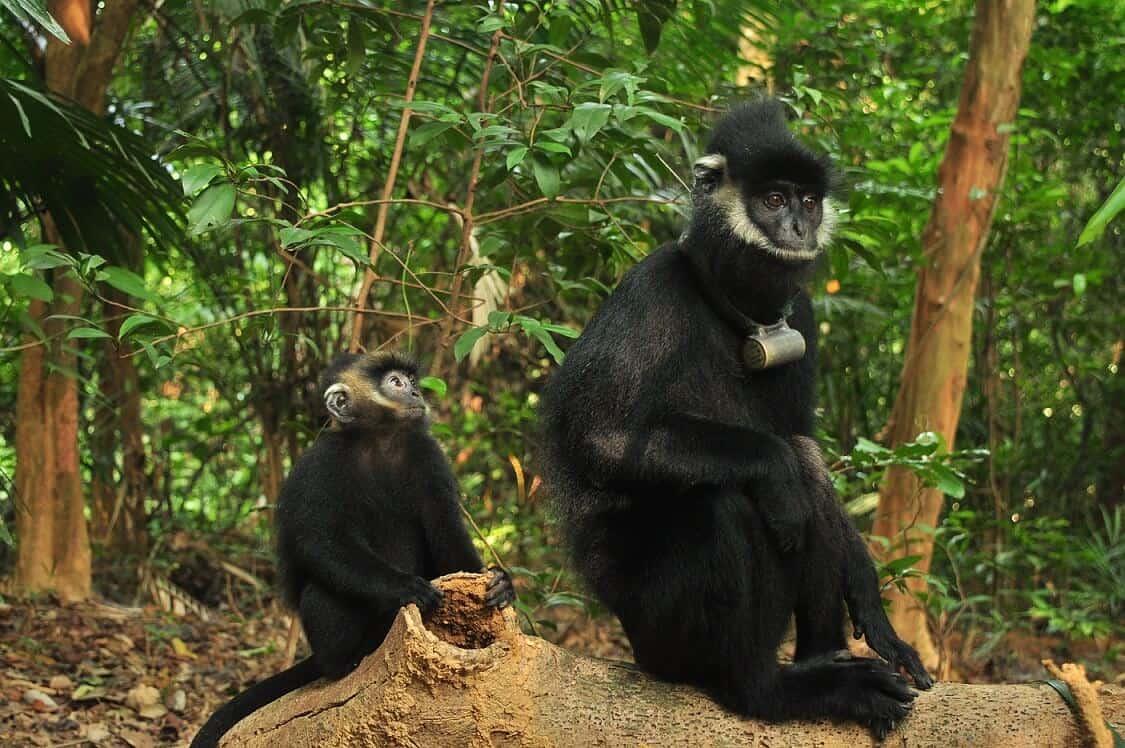 Tam Dao National Park Fauna