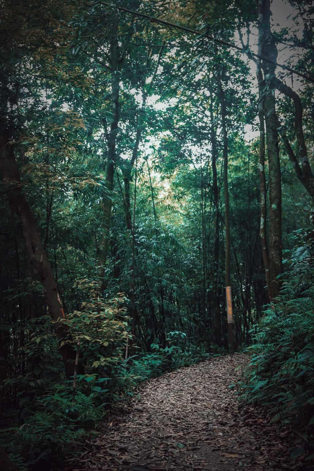 Tam Dao National Park Flora