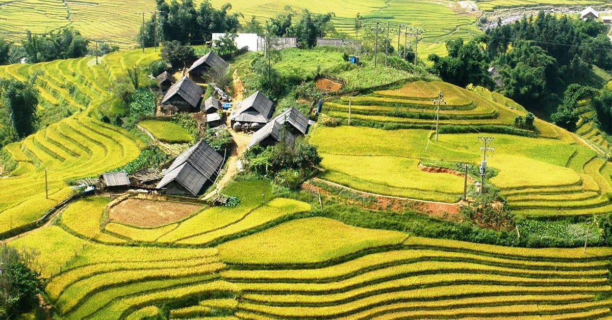 Terrace fields in Ta Van village sapa