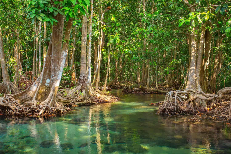 Vam Sat Mangrove Forest - Monkey island eco forest park