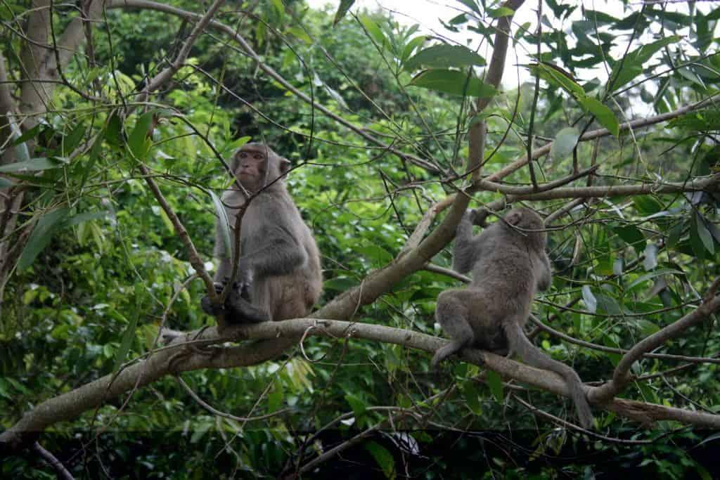 Xuan Son National Park Fauna