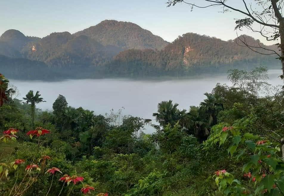 Xuan Son National Park Flora