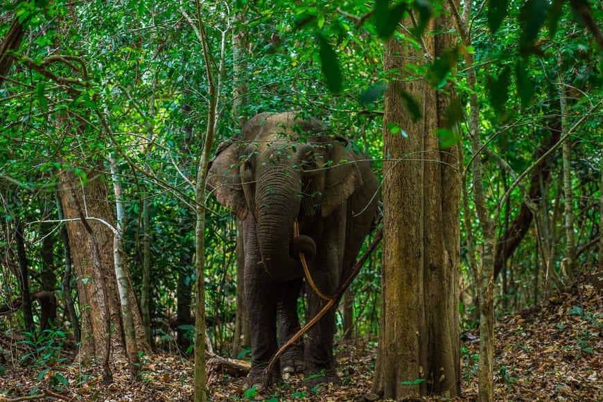 Yok Don National Park Elephant