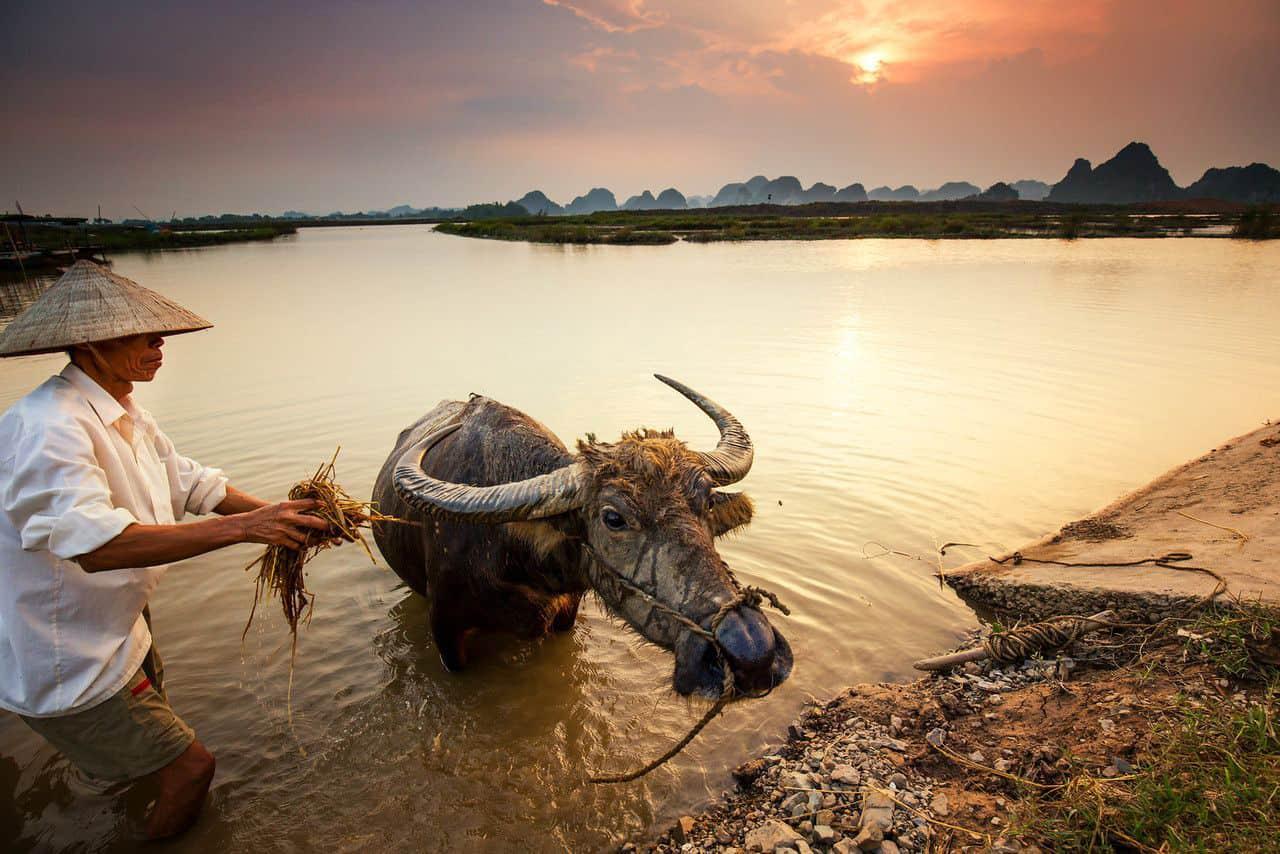 Highlights of Kenh Ga floating village