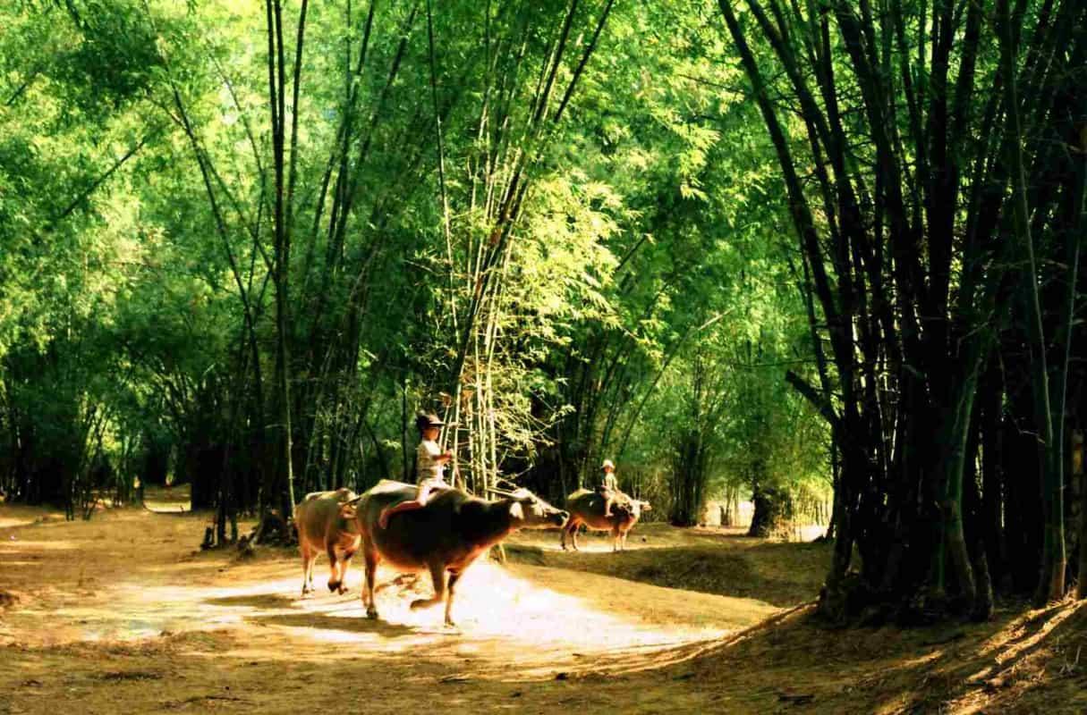 Phong Nam Ancient Village Shepherd