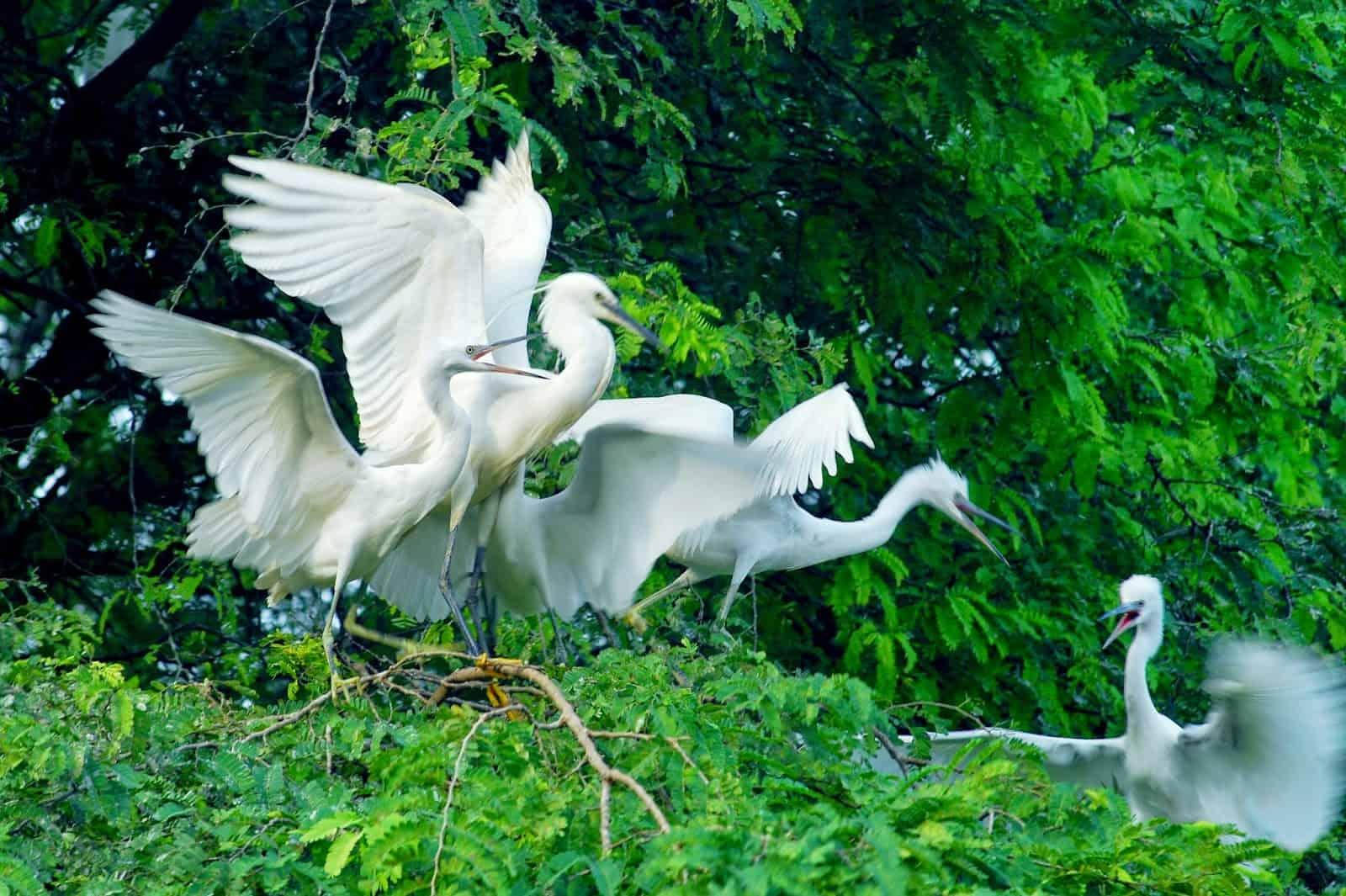 bang-lang-stork-garden