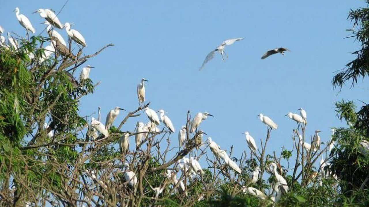 bang-lang-stork-sanctuary