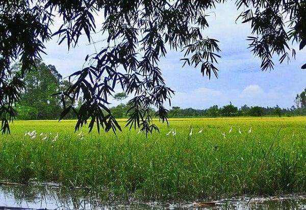 rice-padding-field