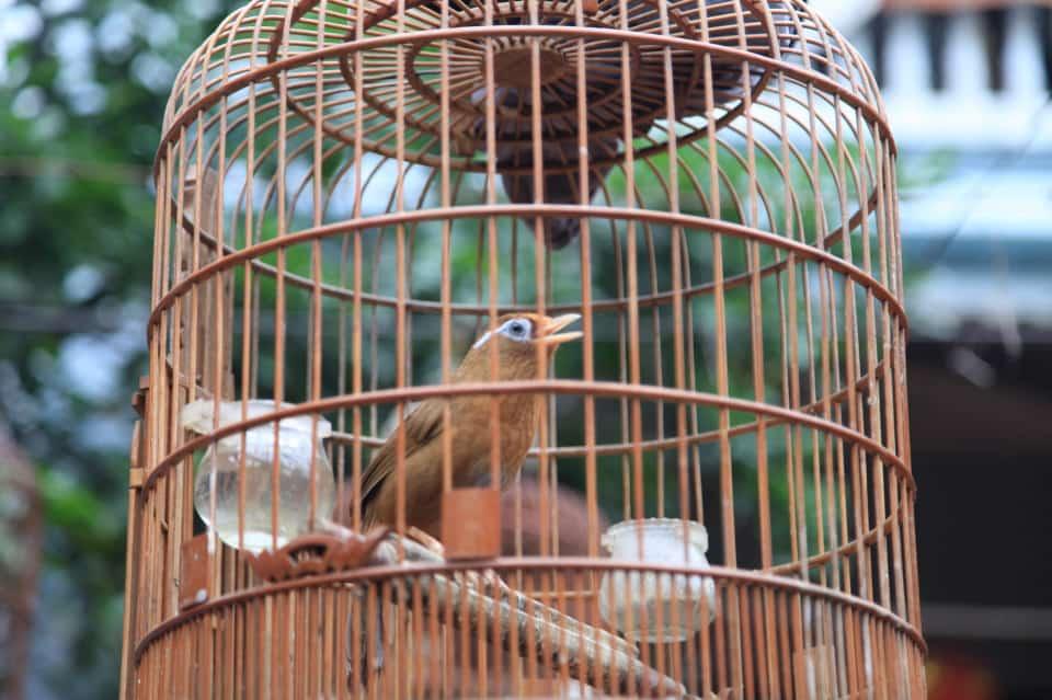 Highlights of Vac bird cage mHighlights of Vac bird cage making villageaking village