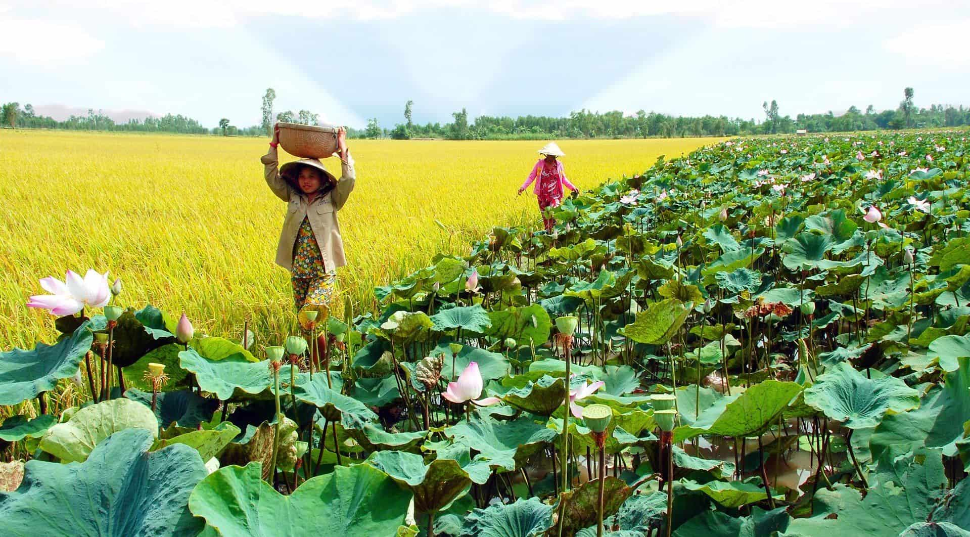 Dong Thap - Mekong Delta provinces